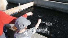 fish hatchery - stock footage