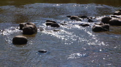 Tuolumne River Stock Footage