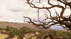 Desert Scenic Stock Footage
