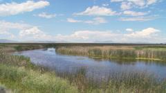 Marsh Stock Footage