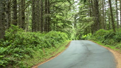 Road Through Coastal Forest Stock Footage