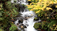 Stock Video Footage of Fall Leaves and Flowing Waterfall R27