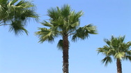 Palm trees Stock Footage