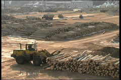 Transport, tree, fire wood - stock footage