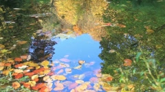 Stock Video Footage of Ripples in the autumn pond.