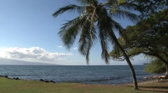 Palmtree Maui,Hawaii Stock Footage