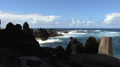 Hawaii boy at Laupahoehoe Point waves Stock Footage