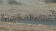 Zebra at the waterhole Stock Footage