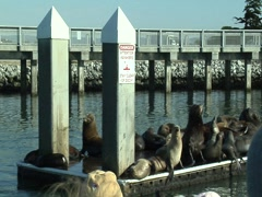 Sea lions viewed from a wildlife tour boat Stock Footage