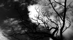 Timelapse clouds flowing past a bare tree  - stock footage