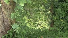 Hawaii Tropical vegetation 2 Stock Footage