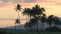Palmtrees sunset Maui,Hawaii Stock Footage
