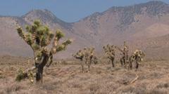 Death Valley Stock Footage