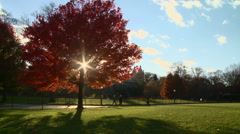 New York Central Park Fall 1 Stock Footage