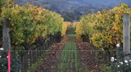 Colorful Vineyards View Stock Footage