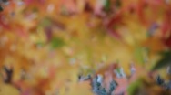 Stock Video Footage of Fall Colors 0953