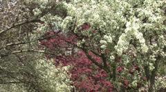 Flowering trees in spring Stock Footage