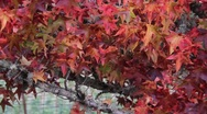 Stock Video Footage of Fall Colors 0923