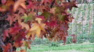 Stock Video Footage of Fall Colors 0911