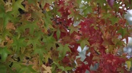 Stock Video Footage of Fall Colors 0896