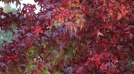 Stock Video Footage of Fall Colors 0893