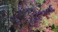 Stock Video Footage of Fall Colors 0890