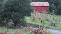 Barn and Ivy 0874 - stock footage