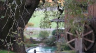Old Mill and Trees 0867 Stock Footage