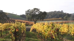 Hillsides and Vineyards - stock footage