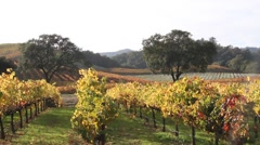 Vineyards in the rolling hills Stock Footage