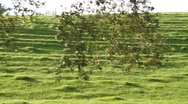 Stock Video Footage of Golden Grassy Hillside 0846
