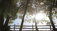 Stock Video Footage of Autumn Sunshine Through Trees 0822