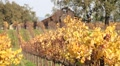 Vineyard Barn and Fall Colors 0818 HD Footage