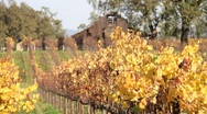 Vineyard Barn and Fall Colors 0818 Stock Footage