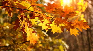 Leaves on the wind, autumn season. Stock Footage