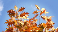 Tree on the wind, autumn season. Stock Footage