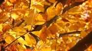 Stock Video Footage of Trees on the wind, autumn season.