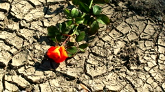 Dried out cracked earth 2 Stock Footage