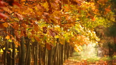 Trees on the wind, autumn season. - stock footage