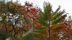 Green and red leafs Stock Footage