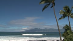 Palmtrees Maui,Hawaii Stock Footage