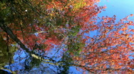 Stock Video Footage of Colorful Abstract Autumn Leaves Water Reflection