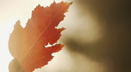 Autumn leaf in hand Stock Footage