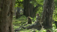 Monkey troop in forest - stock footage
