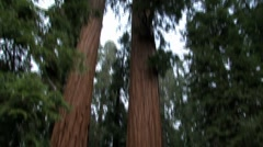 The Giant Sequoia National Monument Stock Footage