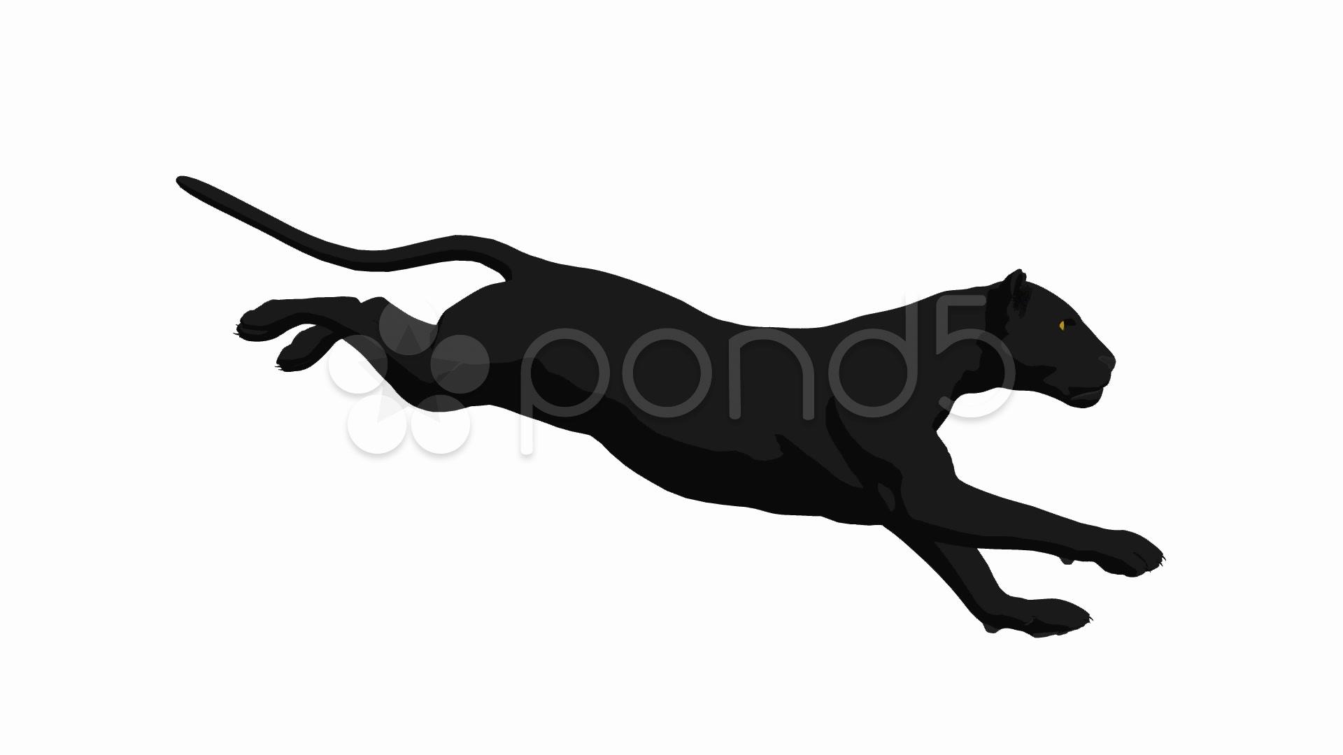 Black Panther Running ~ Hi Res Video #941891