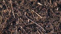 Ants on ant hill Stock Footage