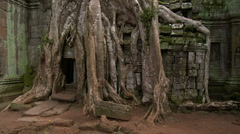 Giant tree root growing over the entrance of a ancient angkor temple Stock Footage