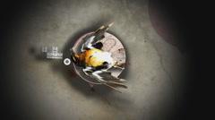 Dead Birdies Stock Footage