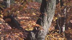 Fall Leaves Autumn Stock Footage
